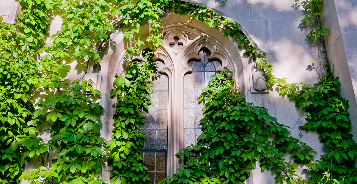 beaumont tower with ivy